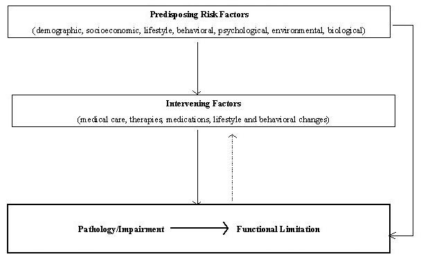 Organization Chart: Predisposing Risk Factors (demographic, socioeconomic, lifestyle, behavioral, psychological, environmental, biological); leads to Intervening Factors (medical care, therapies, medications, lifestyle and behavioral changes); leads to Pathology/Impairment leading to Functional Limitation. Predisposing Risk Factors (demographic, socioeconomic, lifestyle, behavioral, psychological, environmental, biological); leads to Pathology/Impairment leading to Functional Limitation; leads to Intervening Factors (medical care, therapies, medications, lifestyle and behavioral changes).