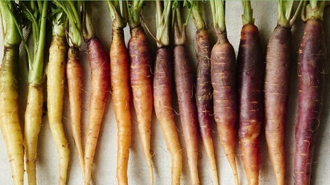 Photo of various colors of carrots.