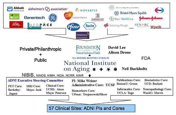 Logos of Companies in ADNI Partnership: Abbott; elan; Lilly; Alzheimer's Association; Genentech; GE; MEDPACE; GSK; Pfizer; Novartis; Innogenetics; Roche; AstraZeneca; Alzheimer's Drug Discovery Foundation; Bristol-Myers Squibb; Bayer HealthCare; Schering-Lough; Synarc; Wyeth; Johnson&Johnson; Eisai; Foundation for the National Institutes of Health.