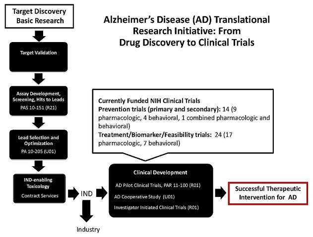 Flow Chart: Target Discovery Basic Research; leads to Target Validation; leads to Assay Development, Screening Hits to Leads PAS 10-151 (R21); leads to Lead Selection and Optimization PA 10-205 (U01); leads to IND-enabling Toxicology Contract Services; leads to IND; leads to Clinical Development -- AD Pilot Clinical Trials, PAR 11-100 (R01), AD Cooperative Study (U01), Investigator Initiated Clinical Trials (R01); leads to Successful Therapeutic Intervention for AD. IND also leads to Industry. Currently Funded NIH Clinical Trials -- Prevention trials (primary and secondary): 14 (9 pharmacological, 4 behavioral, 1 combined pharmacologic and behavioral), Treatment/Biomarker/Feasibility trials: 24 (17 pharmacologic, 7 behavioral); leads to Clinical Development.