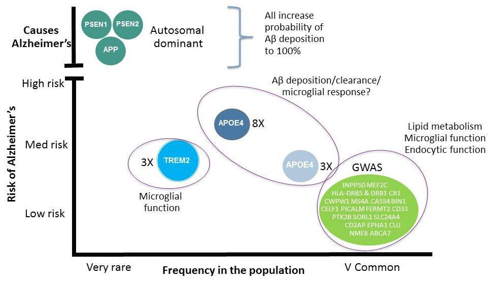 Complicated diagram discussing Risk of Alzheimer's versus Frequency in the Population. Listen to session video for explanation.